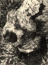 Kmen I